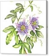 Botanical Illustration Passion Flower Canvas Print