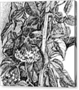 Botanical Series Canvas Print
