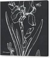 Botanique 1 Canvas Print