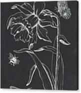 Botanique 2 Canvas Print