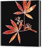 Botany 1 Canvas Print
