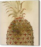Botany: Pineapple, 1585 Canvas Print