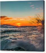 Botany Sunset Splash Canvas Print
