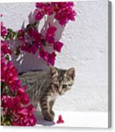 Bougainvillaea Tabby Canvas Print