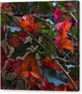 Bougainvillea At Joe's Secret Garden Canvas Print