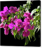 Bougainvillea Cutout Canvas Print