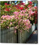 Bougainvillea In Old Eau Gallie Florida Canvas Print