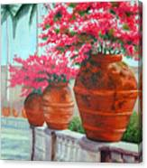 Bougainvillea Pots Canvas Print