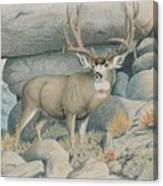 Boulder Buck  Canvas Print