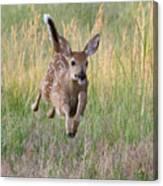 Bounding Bambi Canvas Print