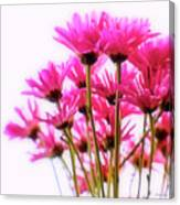 Bouquet Of Chrysanthemums Canvas Print