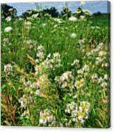 Bouquet Of Wildflowers Along Country Road In Mchenry County Canvas Print
