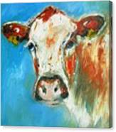 Bovine On Blue  Canvas Print