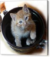 Bowlful Of Kitten Canvas Print