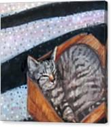 Box Cat Canvas Print