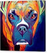 Boxer - Harley Canvas Print
