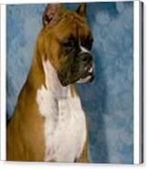 Boxer 151 Canvas Print