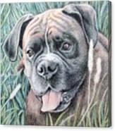 Boxer Yosi Canvas Print