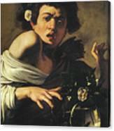 Boy Bitten By A Lizard, 1596 To 97 Canvas Print