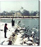 Boy Feeding Swans- Germany Canvas Print