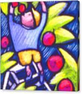 Boy Picking Apples Canvas Print