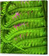 Bracken Fern Canvas Print