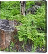 Bracken Fern Meadow Canvas Print