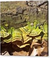 Bracket Fungus Canvas Print
