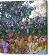 Bradford Pear Tree With Berries Canvas Print