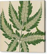 Brake Fern Canvas Print
