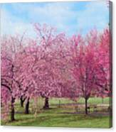 Branch Brook Cherry Blossoms Canvas Print