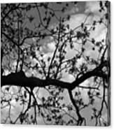 Branch Patterns Canvas Print