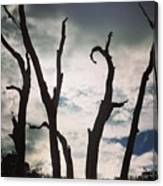 Branch Silouettes On Skeleton Beach Canvas Print