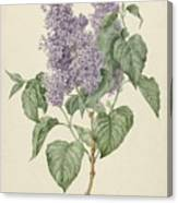 Branch With Purple Lilacs, Maria Geertruyd Barbiers-snabilie, 1786 - 1838 Canvas Print