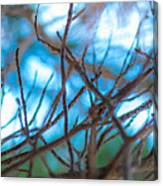 Branches 24 Canvas Print