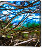 Branches 31 Canvas Print