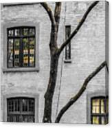 Branches And Windows Canvas Print