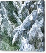 Branches In Winter Season With Fresh Fallen Snow Canvas Print
