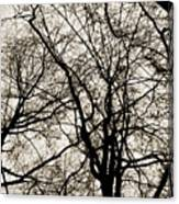 Branches Intertwined Canvas Print