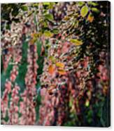 Branches Of A Tree With Colorful Leaves Shining In The Sunlight Canvas Print