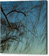 Branches Of A Weeping Willow Tree Canvas Print