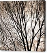 Branches Silhouettes Mono Tone Canvas Print