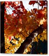 Branching Into Autumn Canvas Print