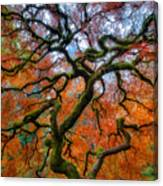 Branching Out In Autumn Canvas Print