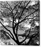 Branching Out In Bw Canvas Print