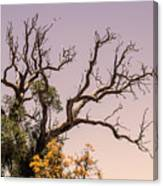 Branching Out Canvas Print