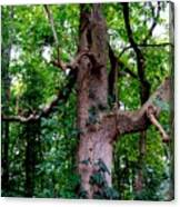 Branching Tree Canvas Print