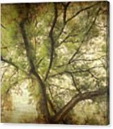 Branching Upward Canvas Print