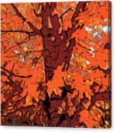 Brandywine  Maple Fall Colors 2 Canvas Print