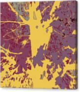Brandywine  Maple Fall Colors 7 Canvas Print